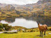 Parque Nacional El Cajas